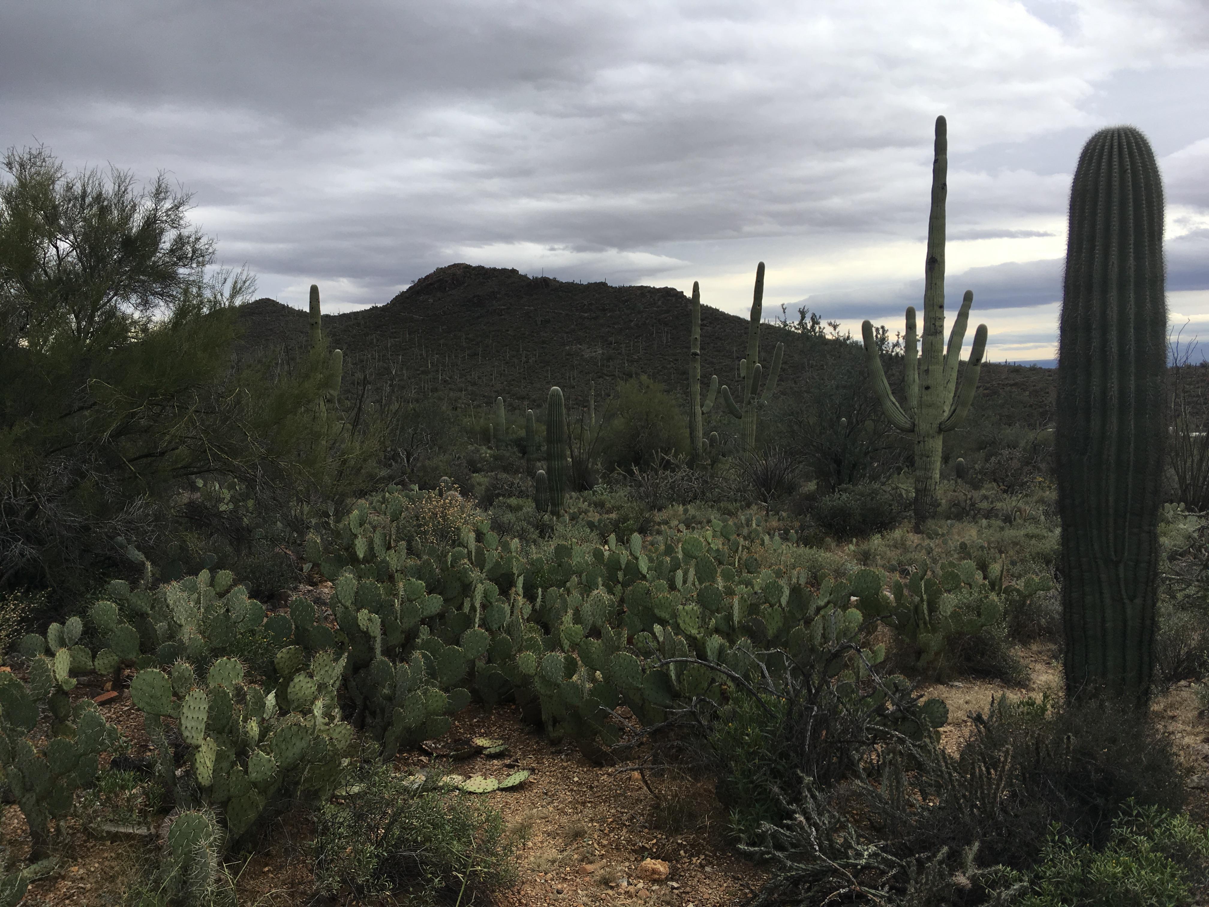 アリゾナ旅その1~ツーソン(ピマ航空宇宙博物館、ソノラ砂漠博物館)