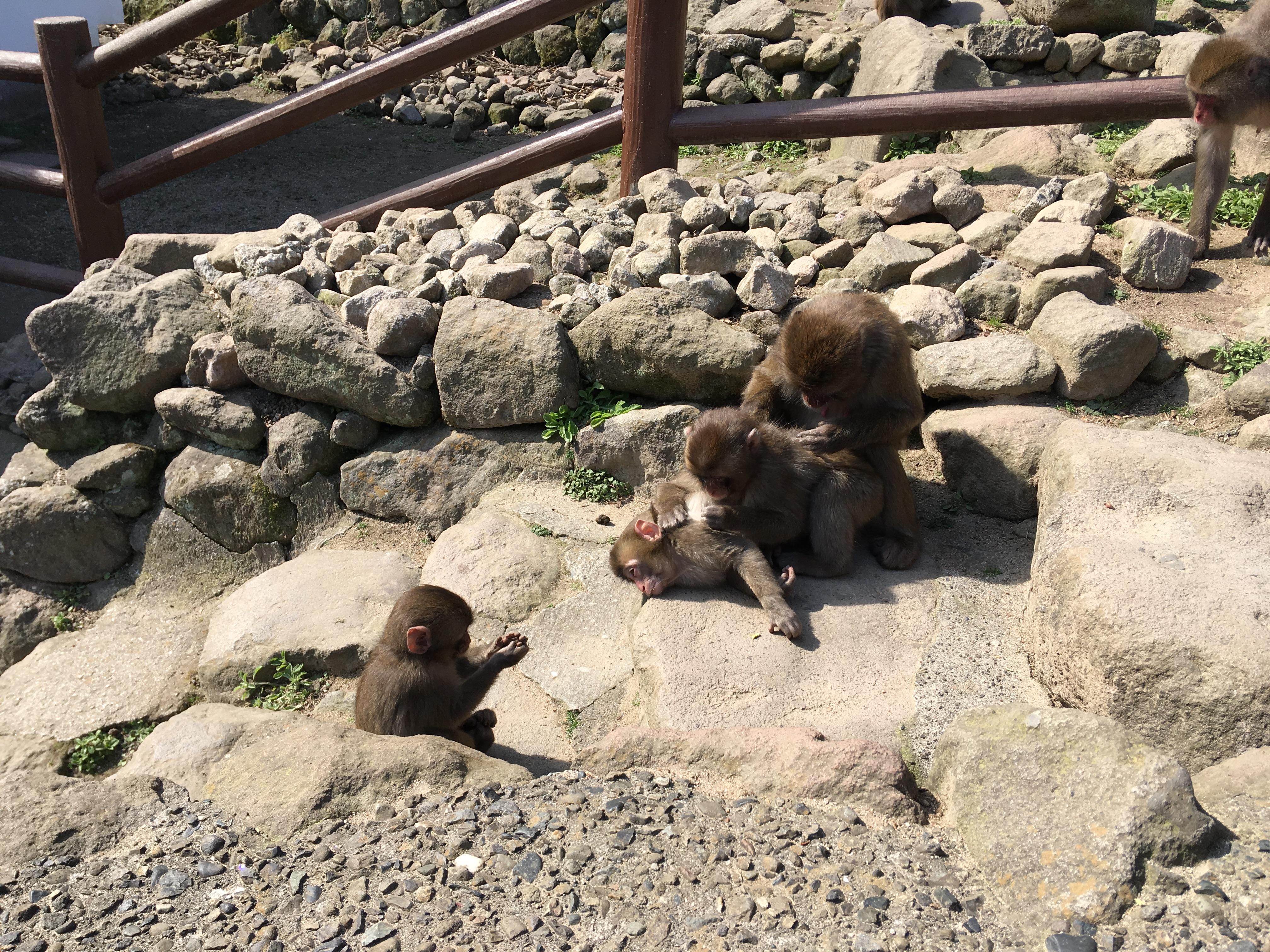 大分の旅その2~高崎山自然動物園と大分府内城