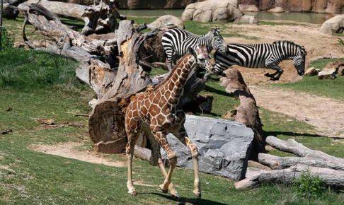 ダラス動物園