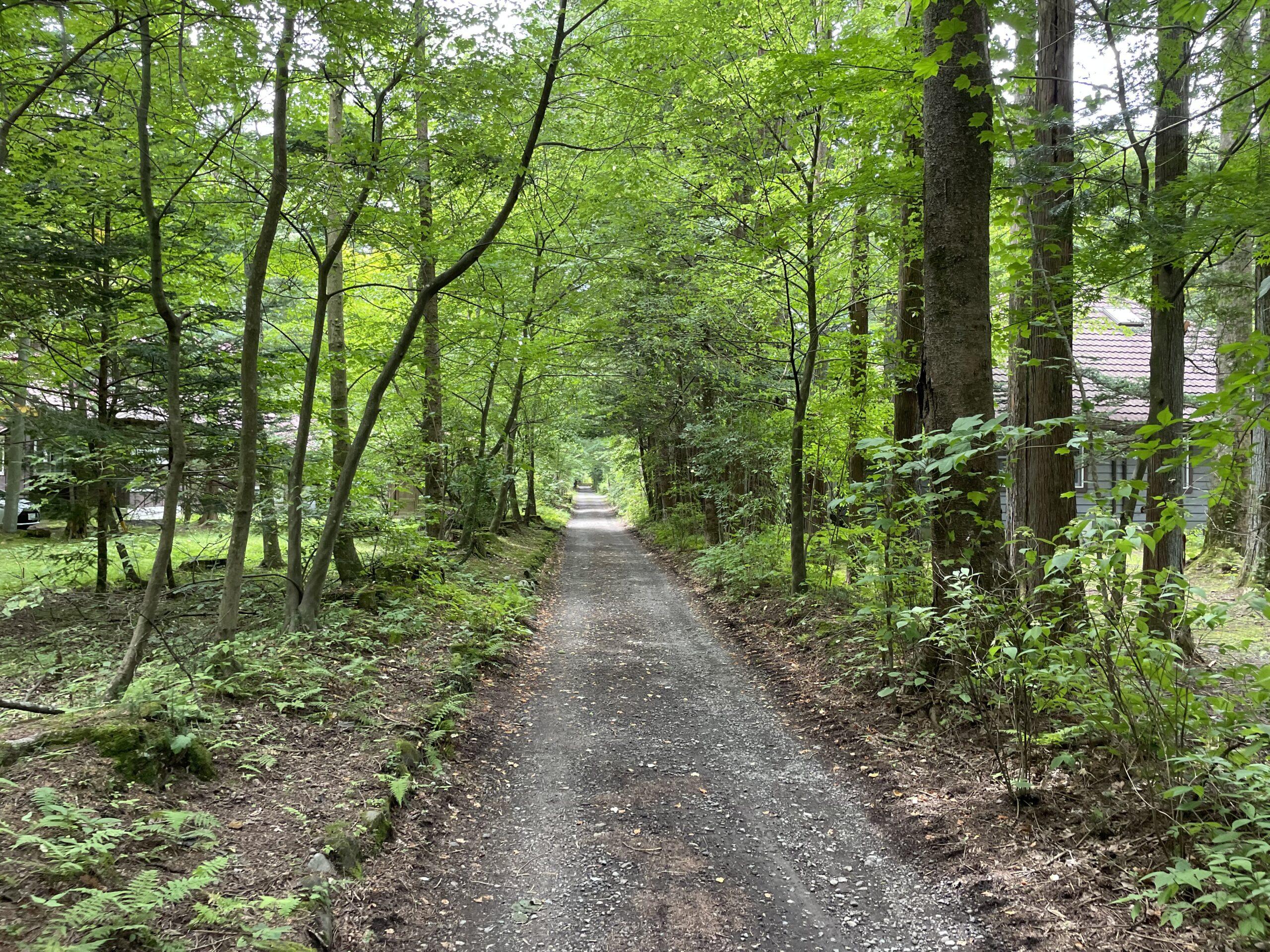 雲場池への道